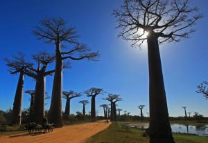 Baobab-sun1-featured