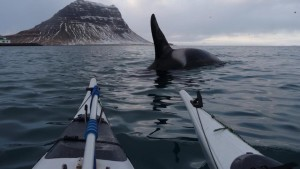 Swim-with-Killer-Whales-Iceland-Home