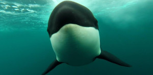 orca-greeting-featured